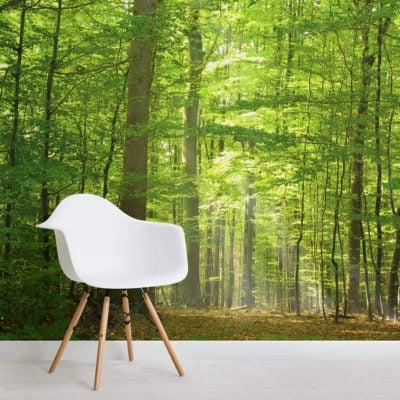 Green-Light-Forest-wallpaper