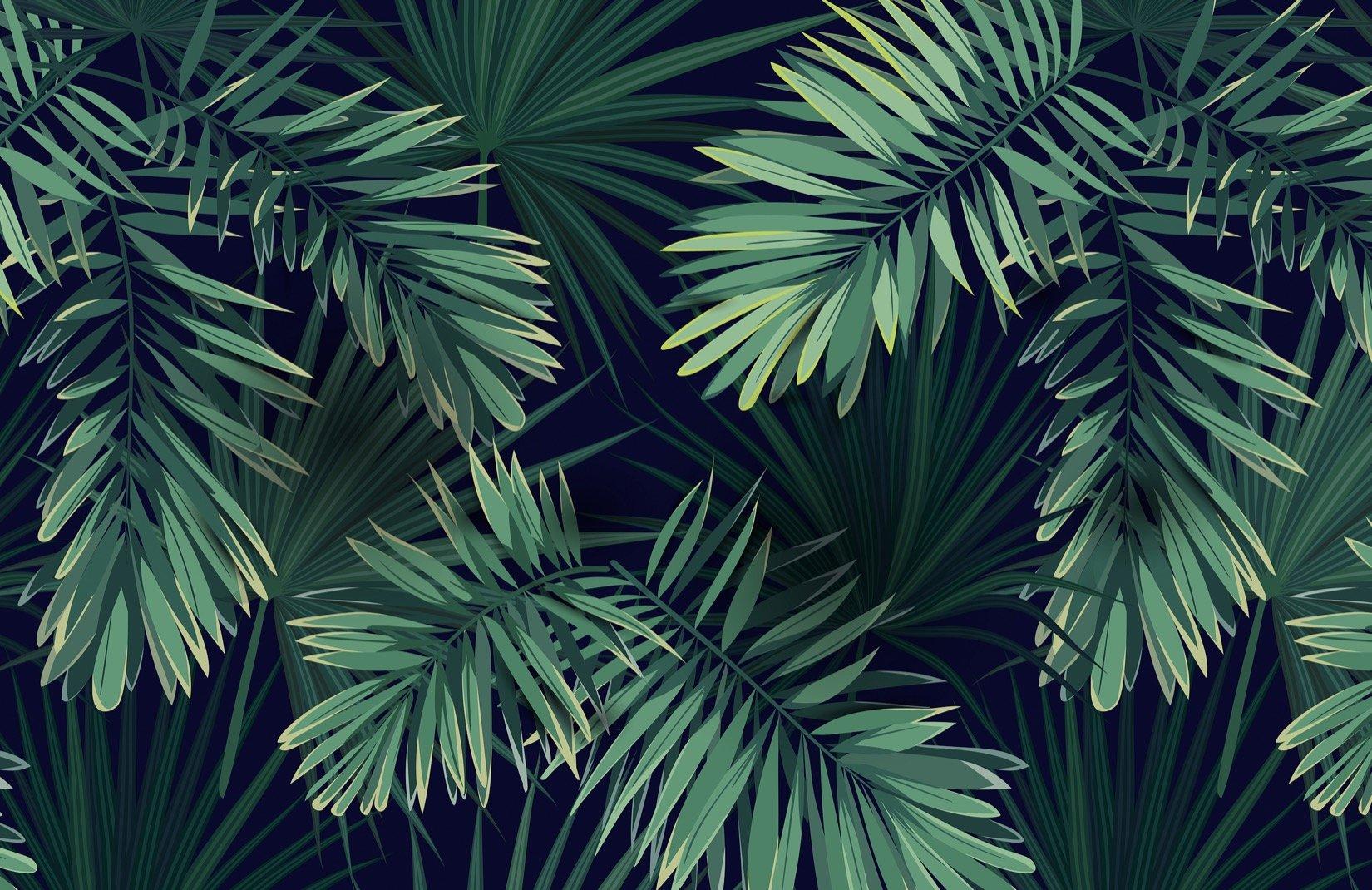 Fototapete Grüne Tropische Pflanze   Hovia DE