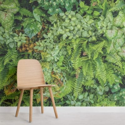 Plant Wall Leaf Wallpaper Mural