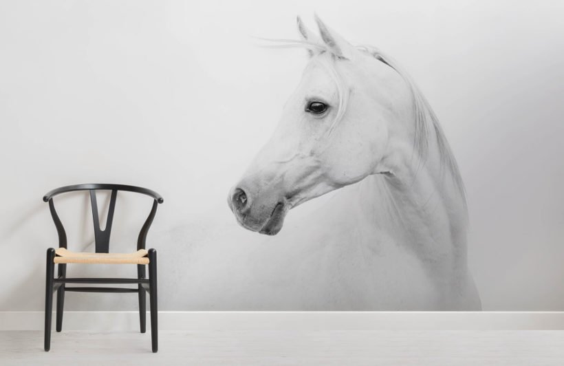 arabian-horse-animal-room-wall-murals