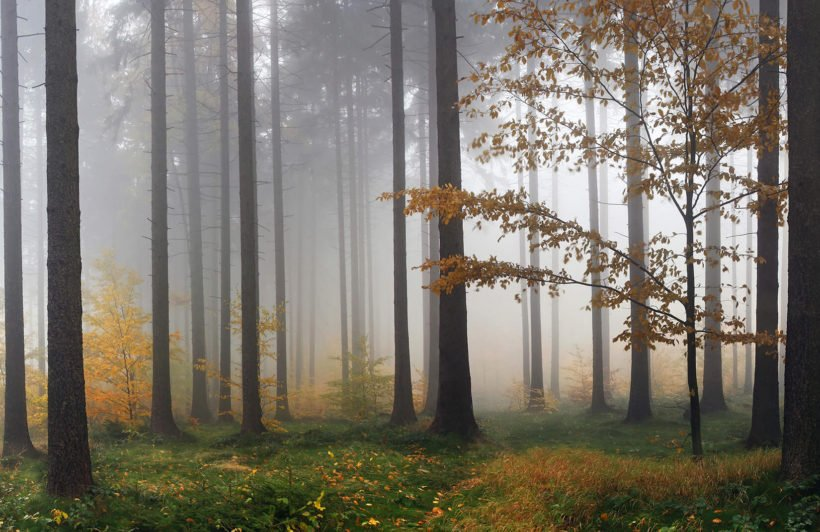 autumn-mist-forest-plain-wall-murals