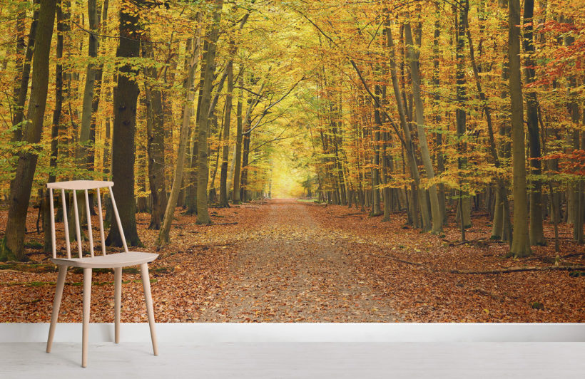 autumn-pathway-tree-forest-room-wall-murals