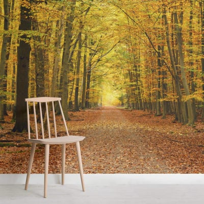 autumn-pathway-tree-forest-square-wall-murals