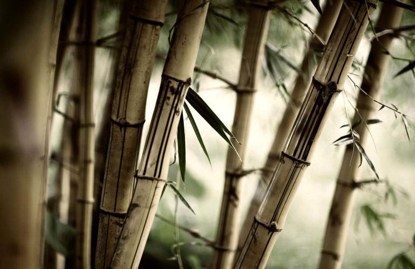 bamboo-jungle-plain-1-wall-murals