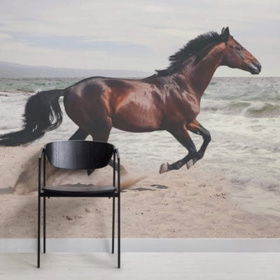 bay-horse-animal-square-1-wall-murals