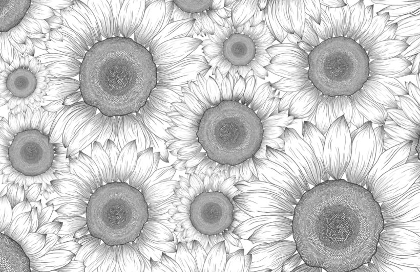 black-and-white-illustrated-sunflower-floral-wallpaper-mural