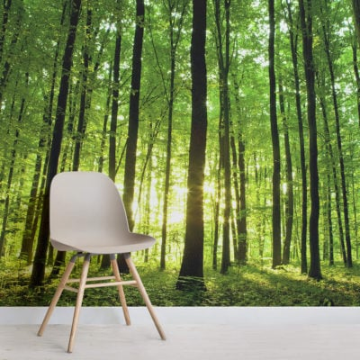 breaking-light-green-forest-square-1-wall-murals