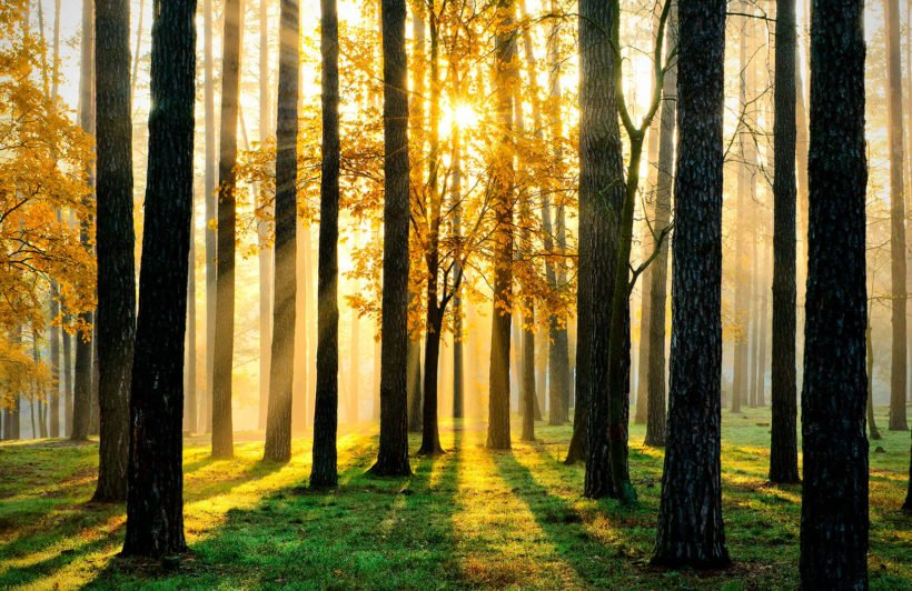 breaking-sun-forest-plain-wall-murals
