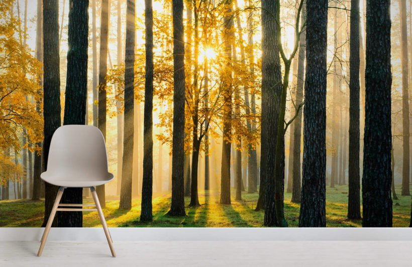 breaking-sun-forest-room-wall-murals