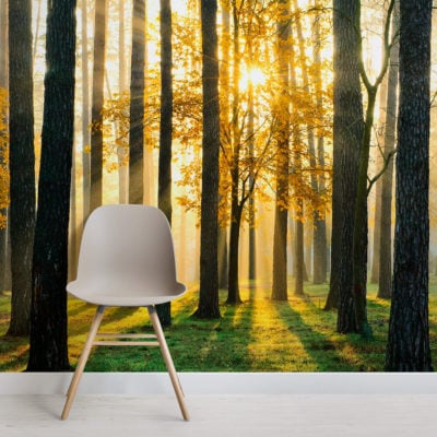 breaking-sun-forest-square-1-wall-murals