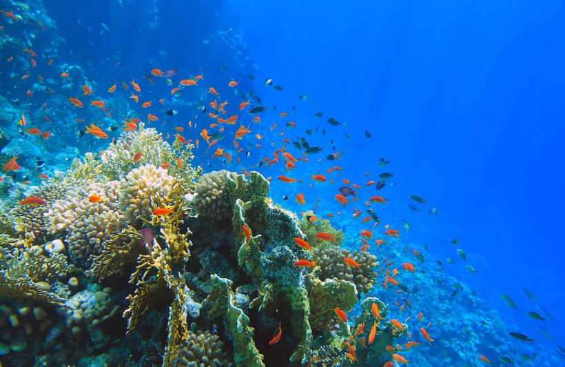 bright-coral-underwater-plain-wall-murals