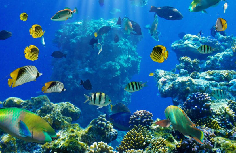 busy-reef-underwater-plain-wall-murals