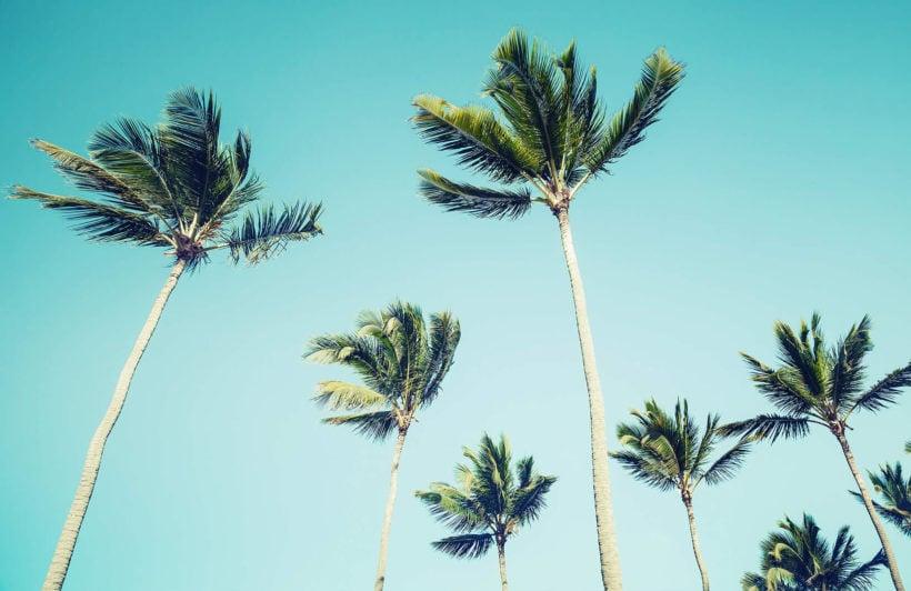 california-palms-beach-plain-wall-murals