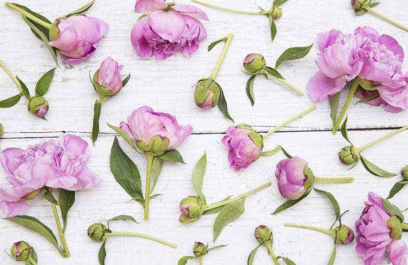 cut-flowers-flower-plain-wall-murals