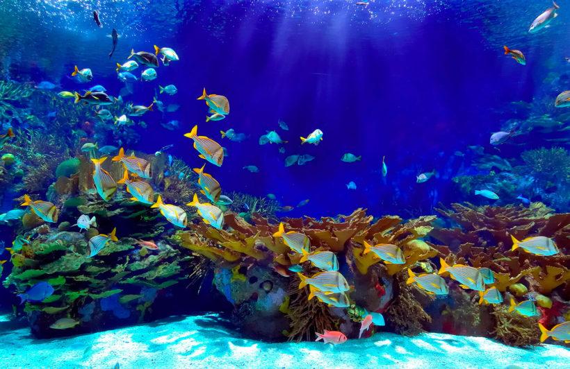 deep-blue-underwater-underwater-plain-wall-murals