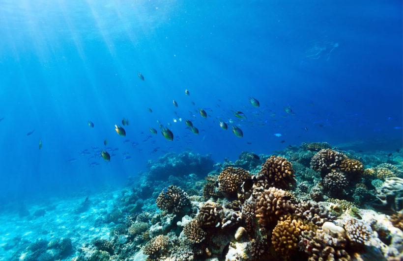 diving-coral-fish-underwater-plain-wall-murals