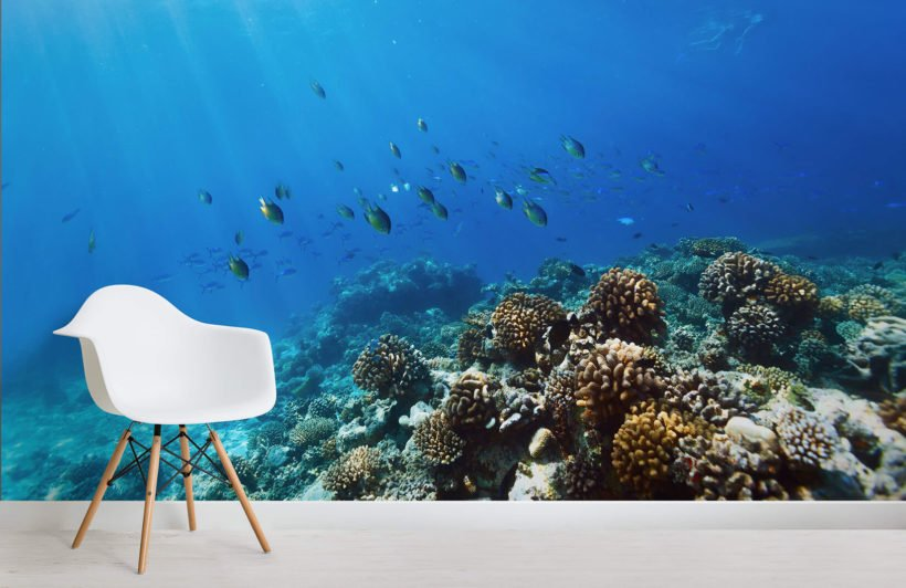 diving-coral-fish-underwater-room-wall-murals