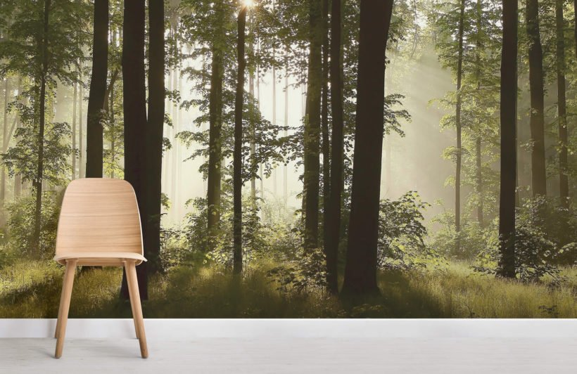 dusk-mist-forest-forest-room-wall-murals