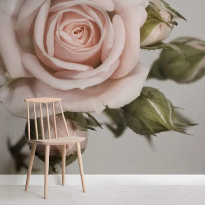 elegant-pink-rose-flower-square-wall-murals