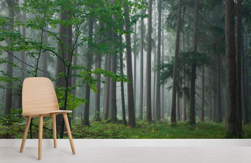 forest-dew-forest-room-wall-murals