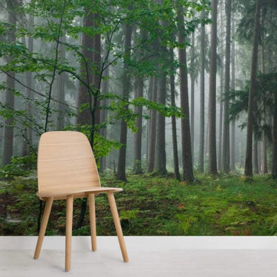 forest-dew-forest-square-wall-murals