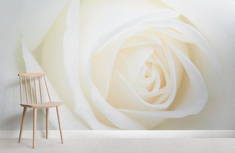 fresh-white-rose-flower-room-wall-murals