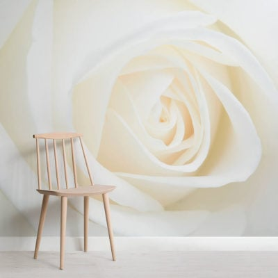 fresh-white-rose-flower-square-wall-murals