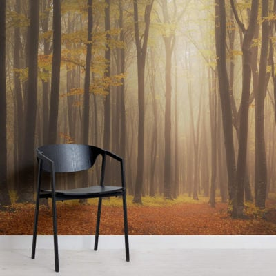 golden-mist-forest-square-wall-murals