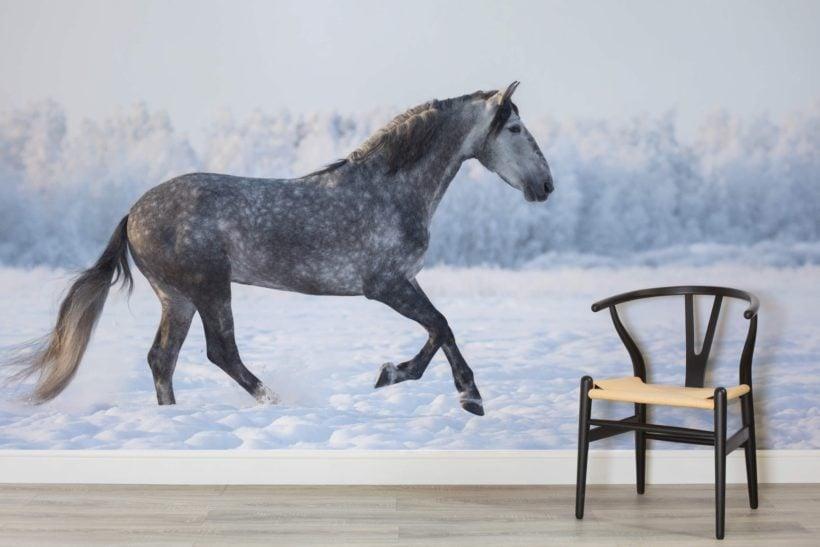 gray-andalusian-horse-animal-room-1-wall-murals