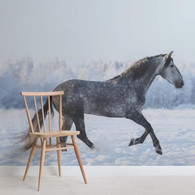 gray-andalusian-horse-animal-square-1-wall-murals