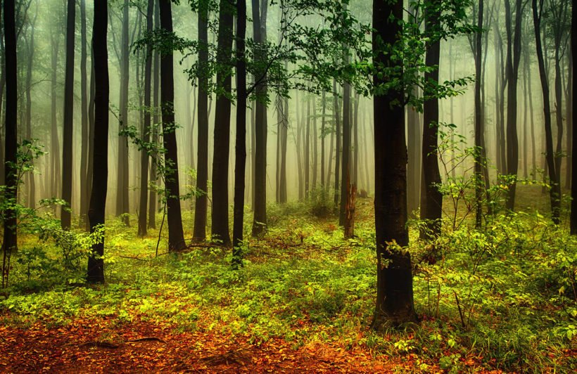 green-and-orange-misty-forest-forest-plain-wall-murals