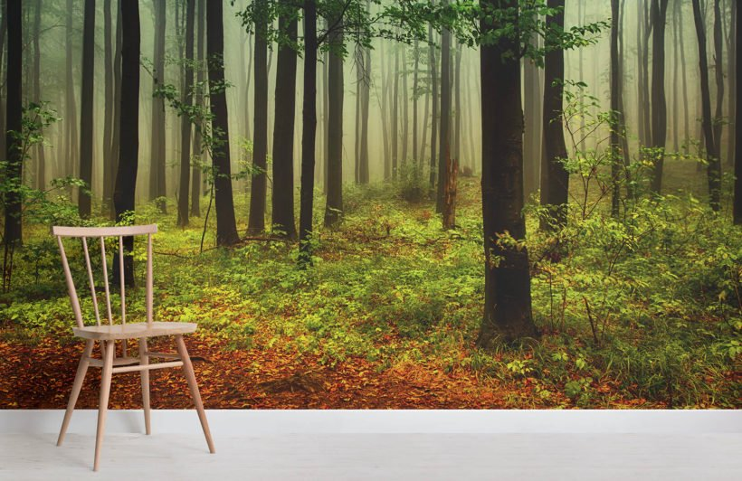 green-and-orange-misty-forest-forest-room-wall-murals