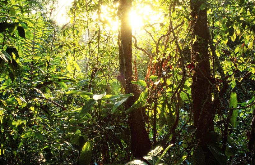 green-leafy-jungle-mural-wallpaper-forest-plain-wall-murals