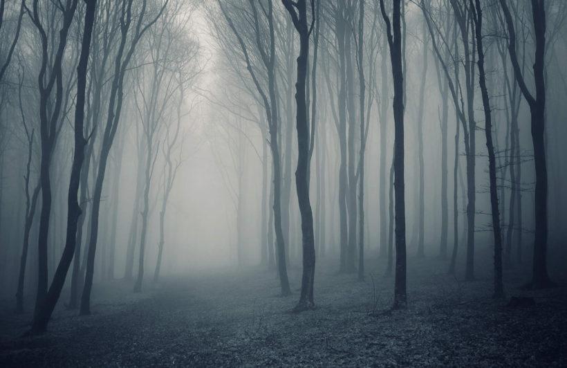 grey-mist-forest-mural-wallpaper-plain-wall-murals