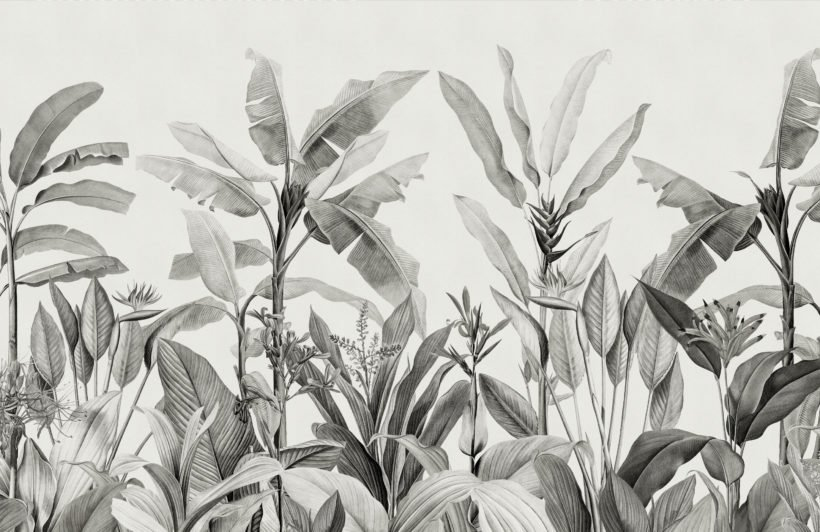greyscale vintage tropical plants wallpaper mural