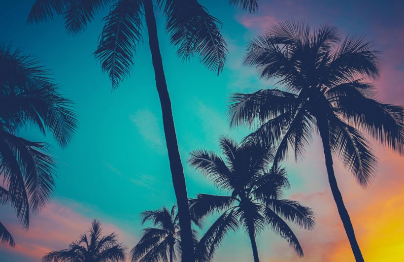 hawaii-palm-trees-mural-beach-plain-wall-murals