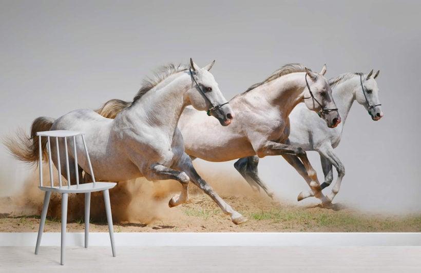 horse-animal-room-wall-murals