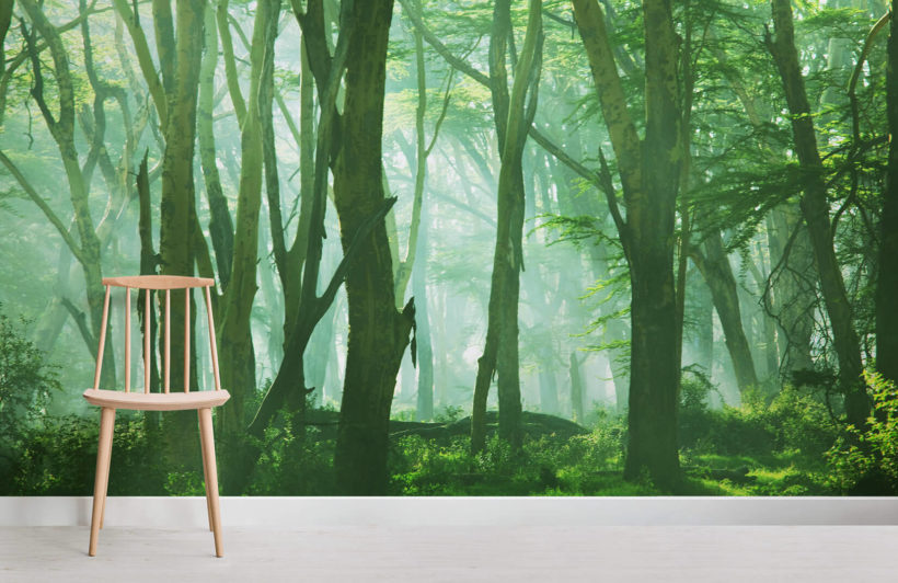 misty-forest-scene-room-wall-murals