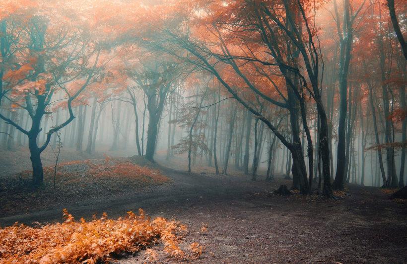 misty-orange-floor-forest-plain-wall-murals