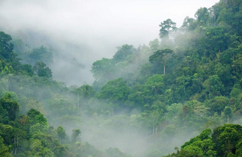 misty-rainforest-plain-wall-murals
