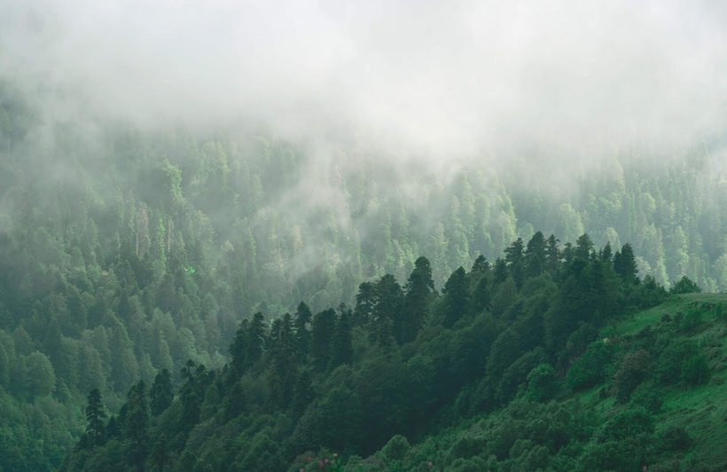 misty-valley-forests-plain-wall-murals