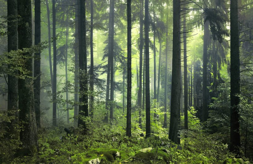 mysterious-spring-forest-plain-wall-murals