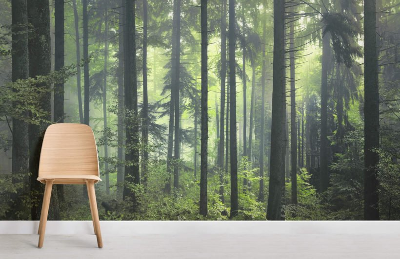 mysterious-spring-forest-room-wall-murals