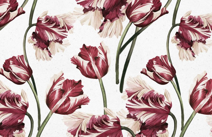 red-tulip-flowers-plain-wall-murals