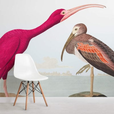 scarlet ibis square
