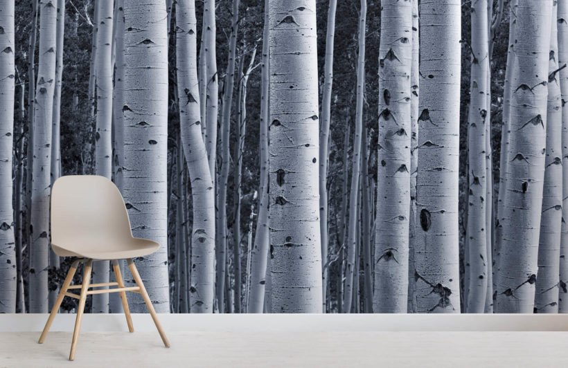 silver-birch-forest-room-wall-murals