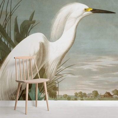snowy-heron-square