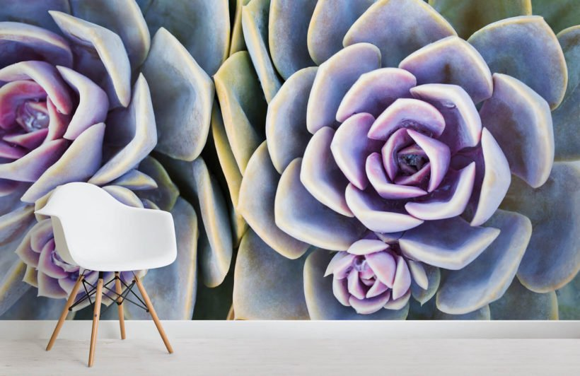 succulent-plant-flowers-room-wall-murals