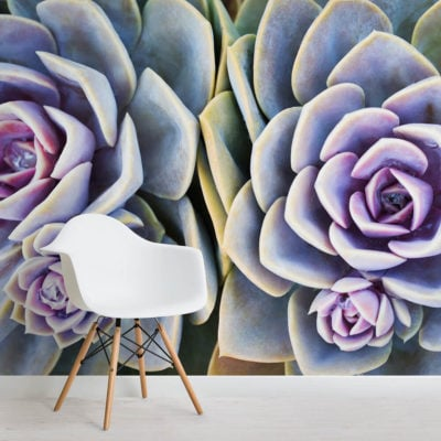 succulent-plant-flowers-square-wall-murals