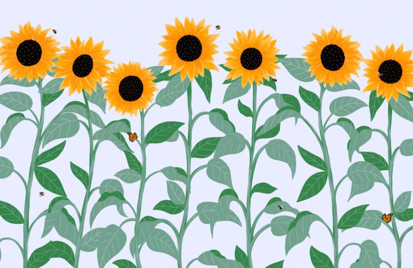 sunflower and butterfly floral wallpaper mural
